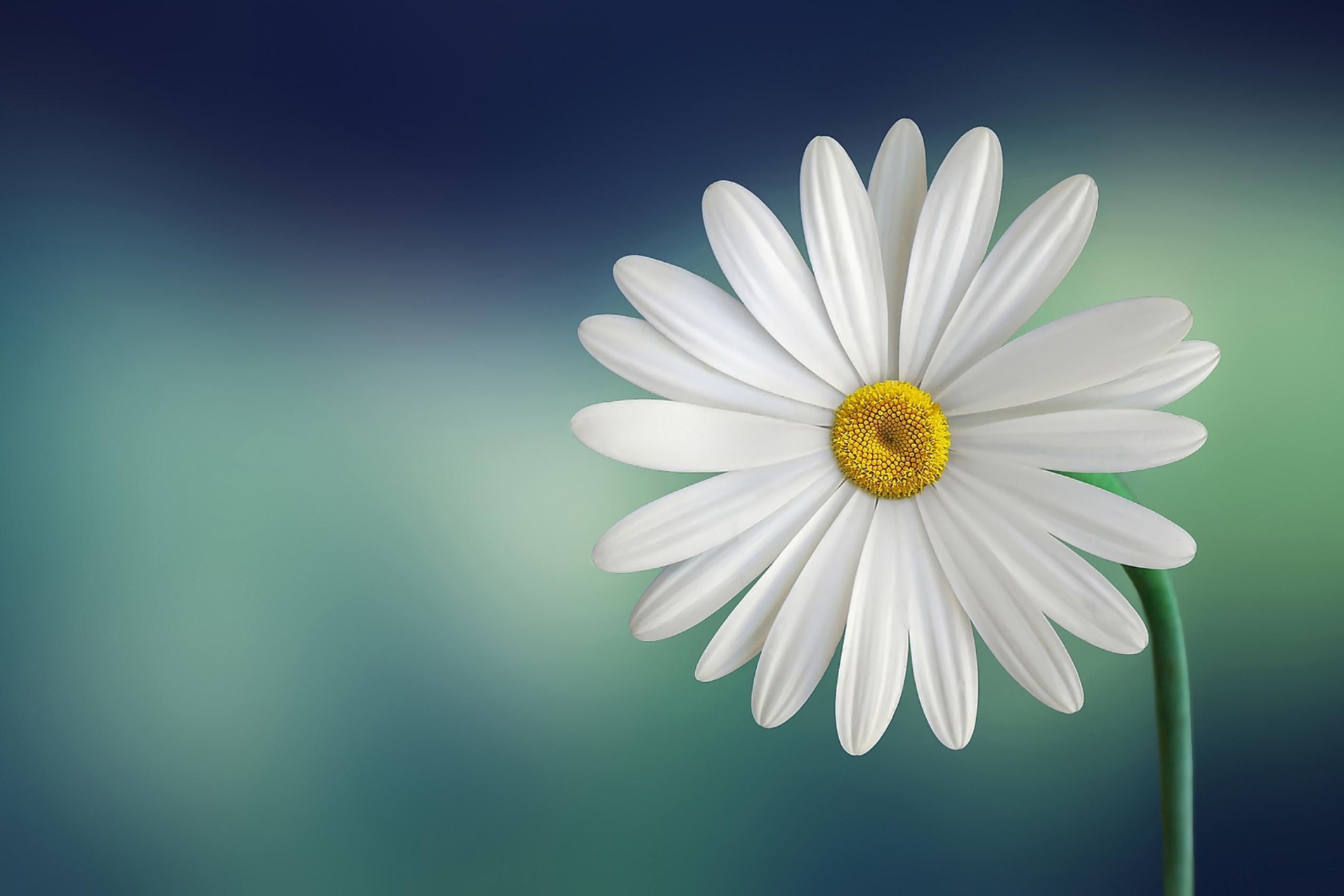 Pranic Healing Training | Nederland